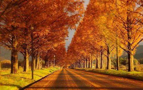大掃除は年末ギリギリ?実は、掃除=秋がおすすめ!
