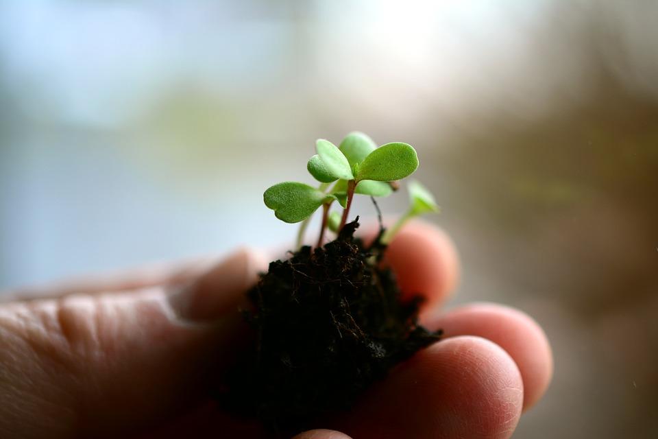 種まきしました!さて咲かせることができるでしょうか?